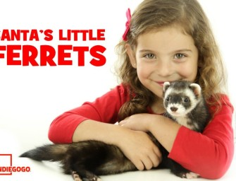 Project Spotlight: Santa's Little Ferrets